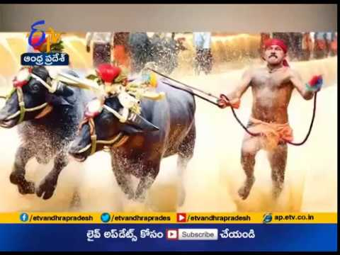 Supreme Court Refuses to Block Buffalo Racing Sport Kambala | in Karnataka