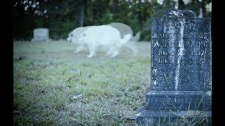 South Carolina Creepy Stories Legends