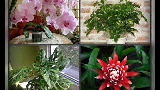Комнатные растения для западного окна