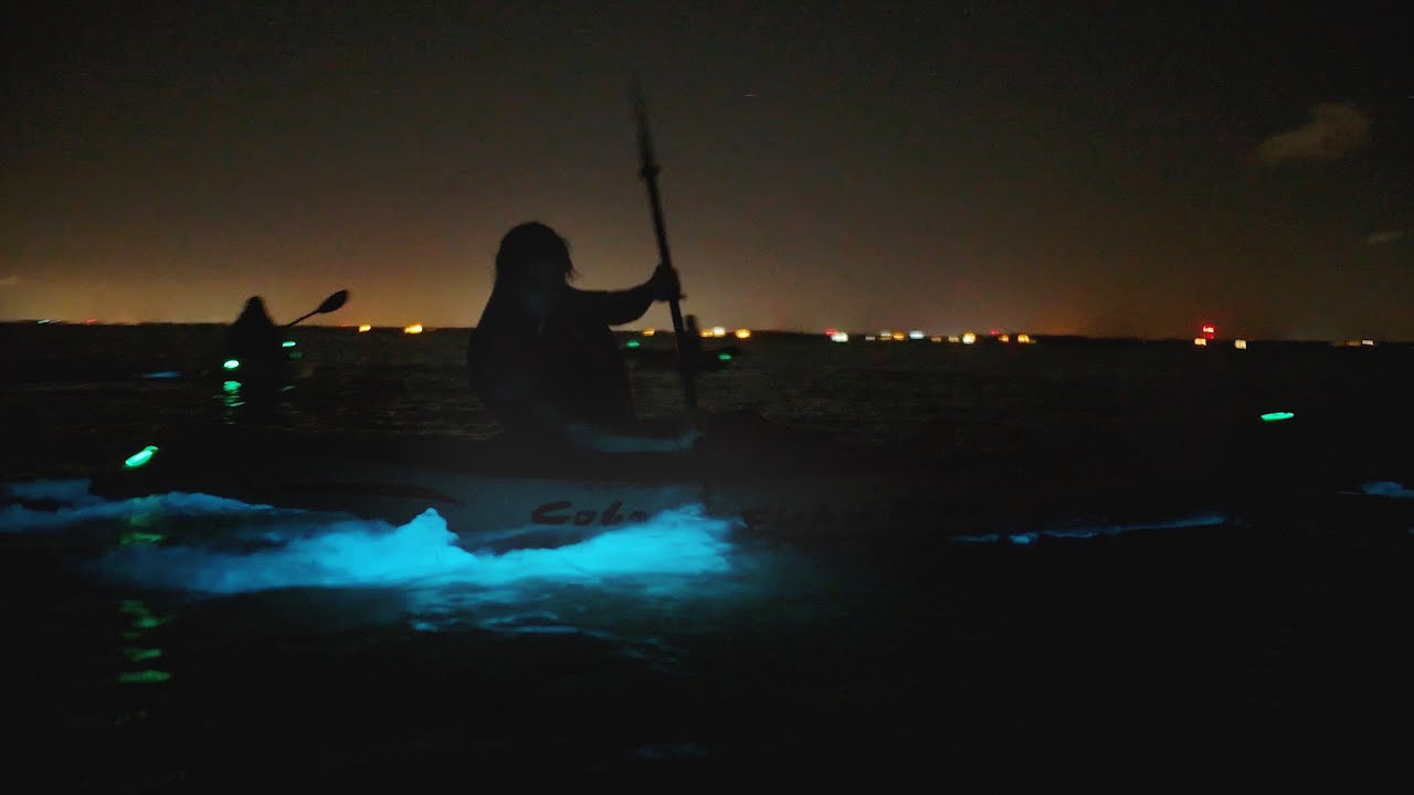Experience Bioluminescence on Florida's Space Coast