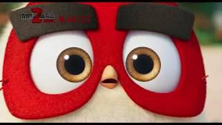 【憤怒鳥玩電影2:冰的啦!】鳥寶寶篇