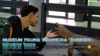 Museum Fauna Indonesia (KOMODO) 2020