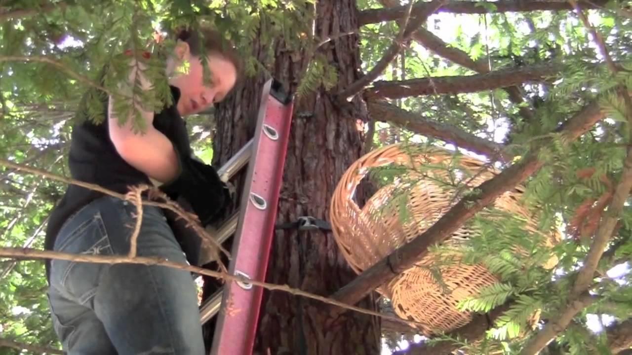 great horned owl nest return youtube