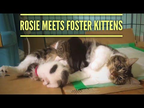 Rosie Meets Foster Kittens!