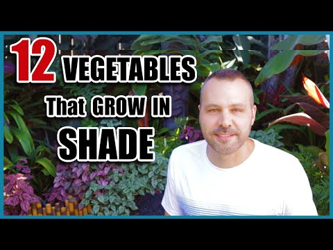 12 Vegetables That Grow in Shade
