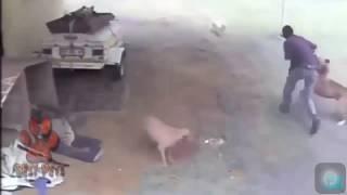 Những khoảnh khắc chó mèo cứu chủ được camera ghi lại