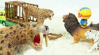 검치호랑이 구출작전 장난감 뽀로로 공룡 트럭 사자 코뿔소 동물 친구들 특공대 Saber toothed cat tiger Toys