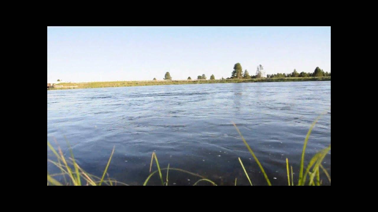Fly fishing frenzy harriman state park idaho youtube for Harriman state park fishing