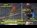 Lomba Kicau Burung Kenari Kenari Apache Orbitan R Makin Memukau Di Lapangan Eps  Mlk Randa  Mp3 - Mp4 Download