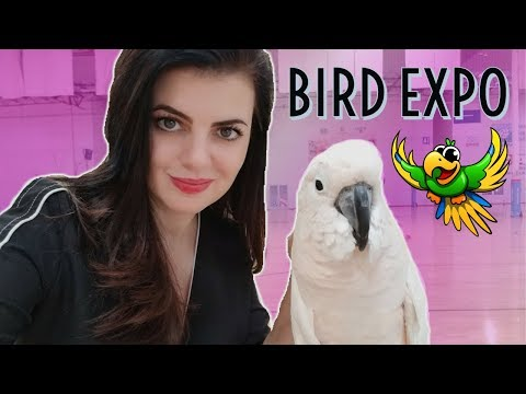What Is Orange County Exotic Bird Expo Like? | A Talk On breeding Parrots | Anaheim 2018