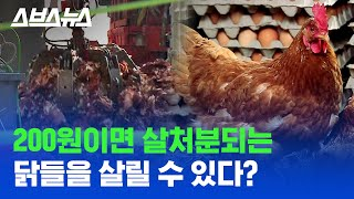 200-won vaccine can save chickens?