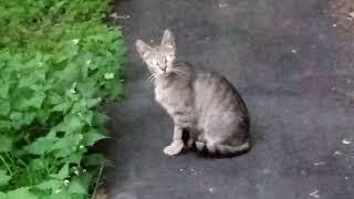 Коты со светящимися глазами 05.06.2019