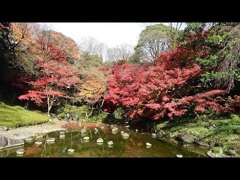 Autumn leaves at Koishikawa Korakuen Gardens, Tokyo
