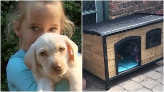 Three Days After Thieves Stole A Little Girl's Puppy, The Family Saw A Shape Moving By The Kennel