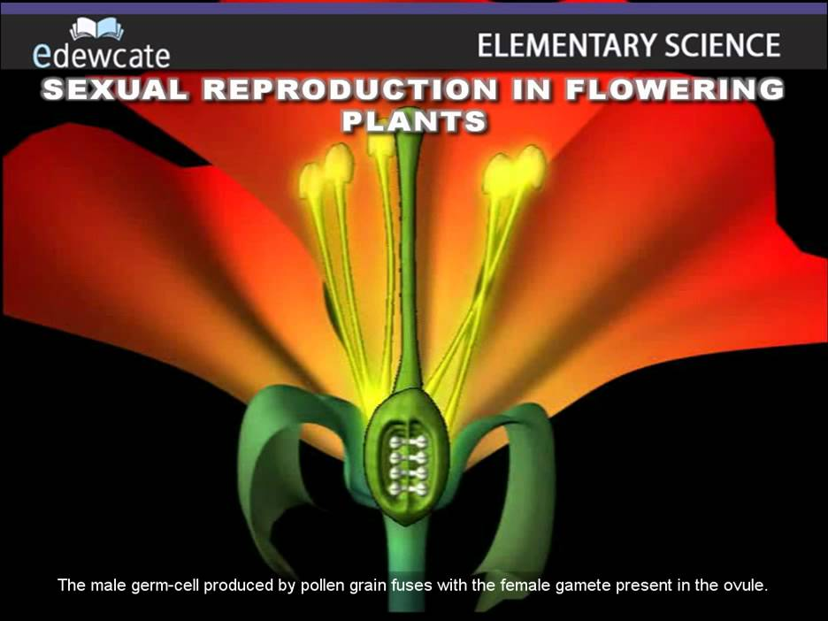 Sexual reproduction in plants examples of