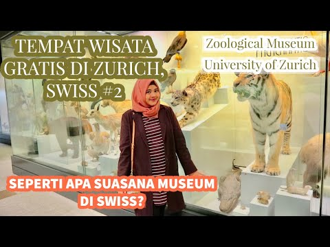 ZOOLOGICAL MUSEUM UNIVERSITY OF ZURICH | TEMPAT WISATA GRATIS DI ZURICH SWISS #2