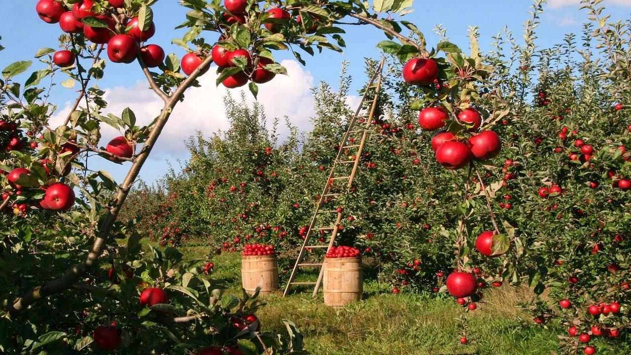 3 Ways to Transform Your Home Garden to a Home Farm - YouTube