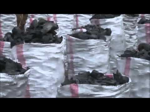 Le développement par les arbres - RD Congo