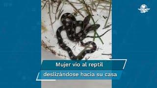 Una mujer documentó el avistamiento con un video donde se muestra al reptil de dos cabezas moviéndose por un recipiente
