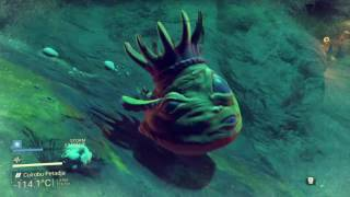 NMS Hentai Monster