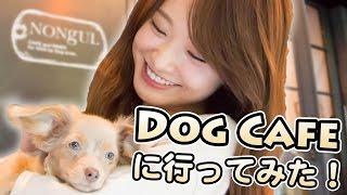 チワックスと、おしゃれドックカフェに行ってみた♡【Dog Cafe】