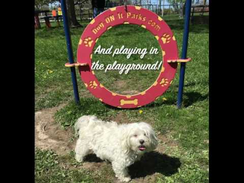 At the dog park