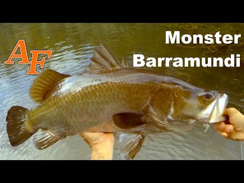 Monster Jungle Barramundi on Soft Plastic Lure Over Night Trip Andysfishing Big Fish Video EP.212