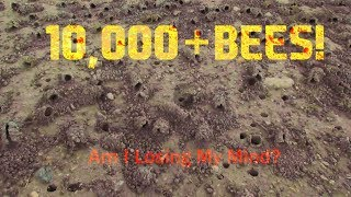 🐝Swarmed by 10,000+ Bees and Lived To Share This Video!   The Bees Knees🐝