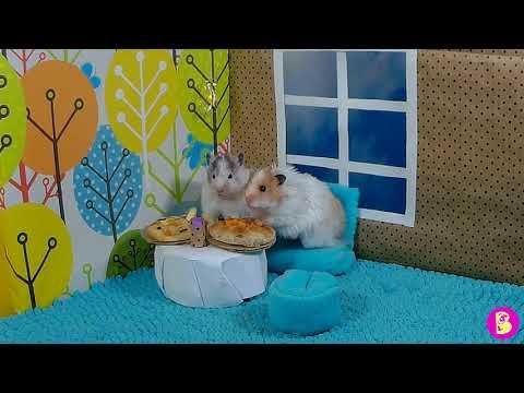 ХОМЯЧКИ В КАФЕ/Hamsters