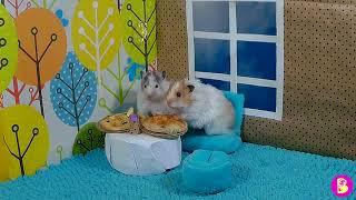 ХОМЯЧКИ В КАФЕ/Hamsters in a cafe