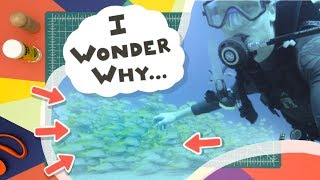 Why do Fish Swim in Schools?