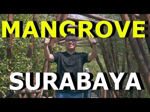 wisata-hutan-mangrove-wonorejo-surabaya-2019!-suasana-alam-cocok-buat-foto-dan-olahraga-jogging