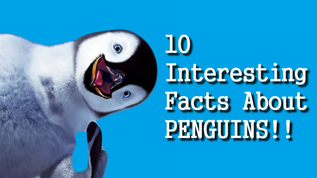 10 interesting facts about penguins hd youtube