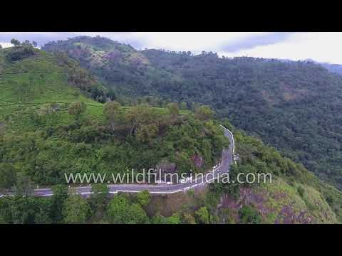 Eastern Ghats shola forests and tea gardens: aerial footage along South India Coromandel coast