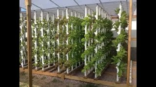 How to , Green House and Vertical Hydroponic System.