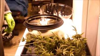 Ipower 16 Inch Leaf Bowl Trimmmer in action