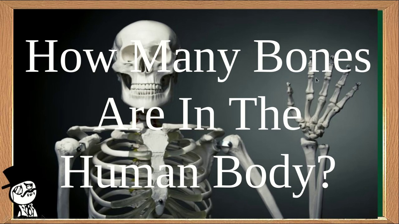 How many bones in the human body total