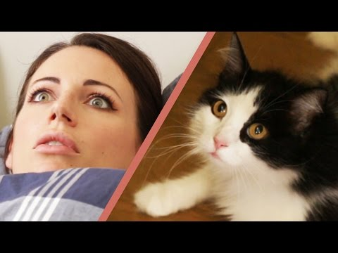 Thumbnail: 10 Signs Your Cat Owns You