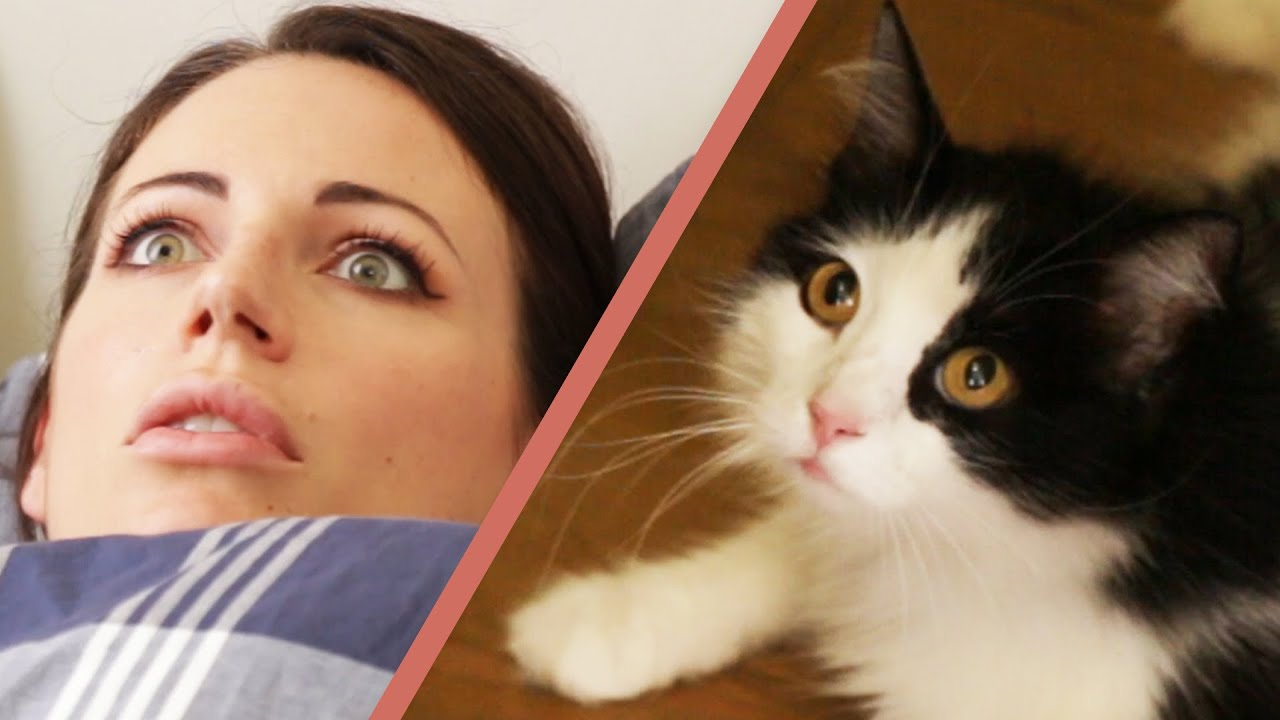 10 Signs Your Cat Owns You Doovi