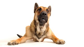 How To Stop Dog Aggression Towards Other Dogs'