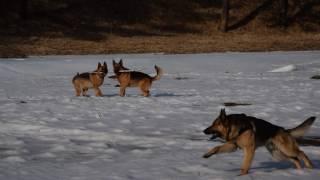 Комедия. Три собаки. 2017. Трейлер.