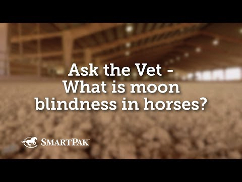 Ask The Vet - What Is Moon Blindness In Horses?