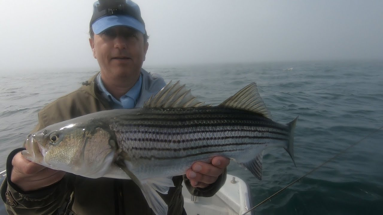 Fly Fishing and Topwater Action for Striped Bass on Rolling Seas