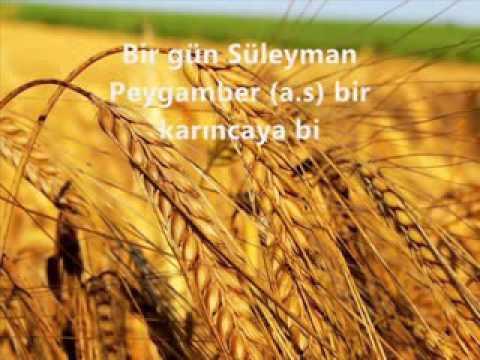 Karinc Hz.Suleyman peygemberle konusmasi