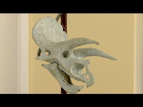 Triceratops Sculpture 1
