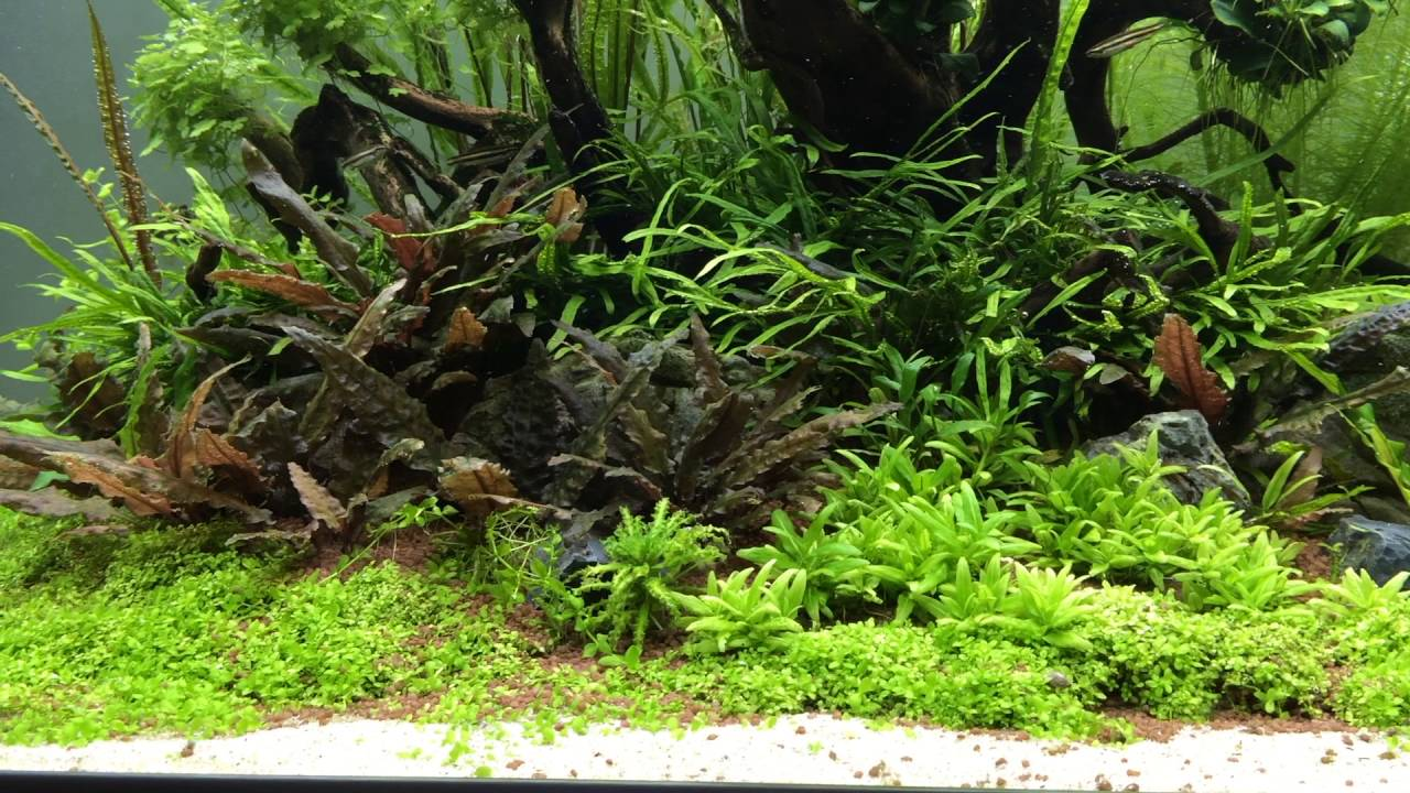Aquascape Jungle Island - discontinued - YouTube