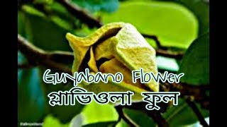 Guyabano Flower | Dennis Gonzales |