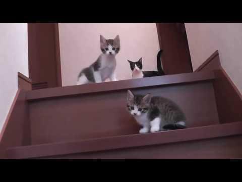 待望の階段エリア開放に嬉しそうな子猫たち