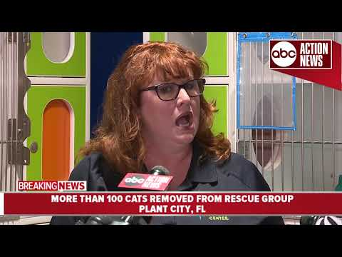 More than 200 cats removed from rescue group| News conference