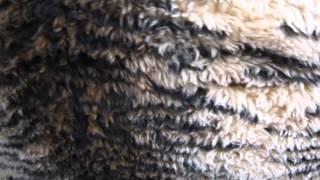 видео Шумоизоляция днища Ваз 2104-2105-2107